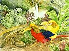Chinese Golden Pheasants